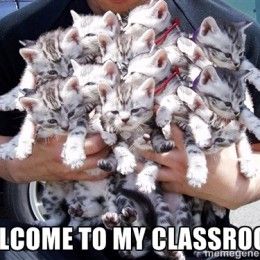 Welcome to my classroom image with a male figure holding a collection of kittens.