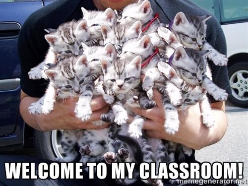 herding cats